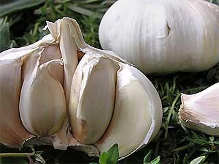 3 Manfaat Bawang Putih Untuk Jerawat Meradang Dan 4 Khasiat Kecantikan Wajah